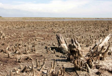 cambiamenti climatici smeda